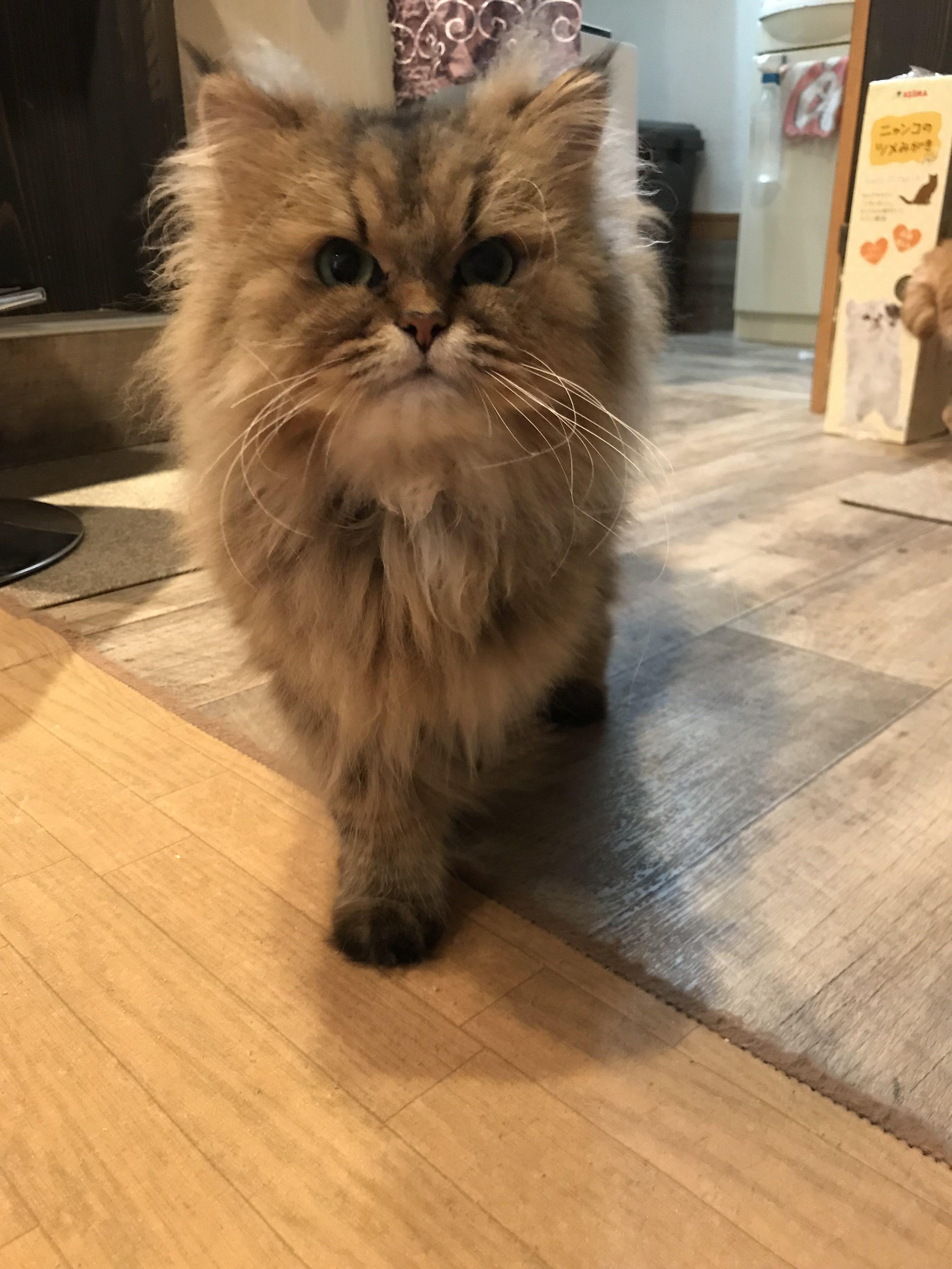 店長にとっての保護猫🐱