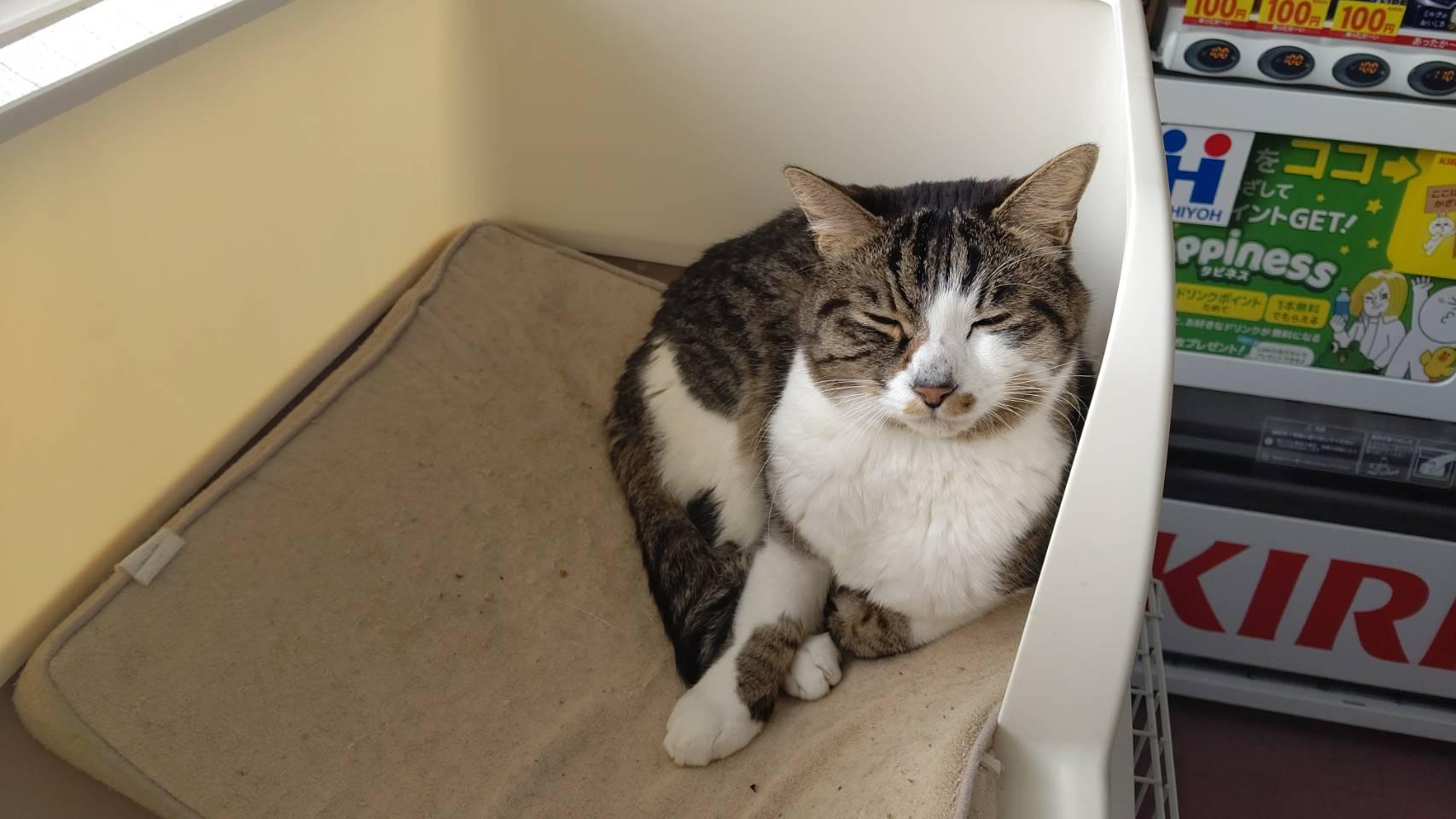2月2日日曜日保護猫イベント開催🐱