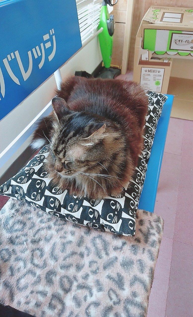 2月22日第三回保護猫イベント開催のご報告
