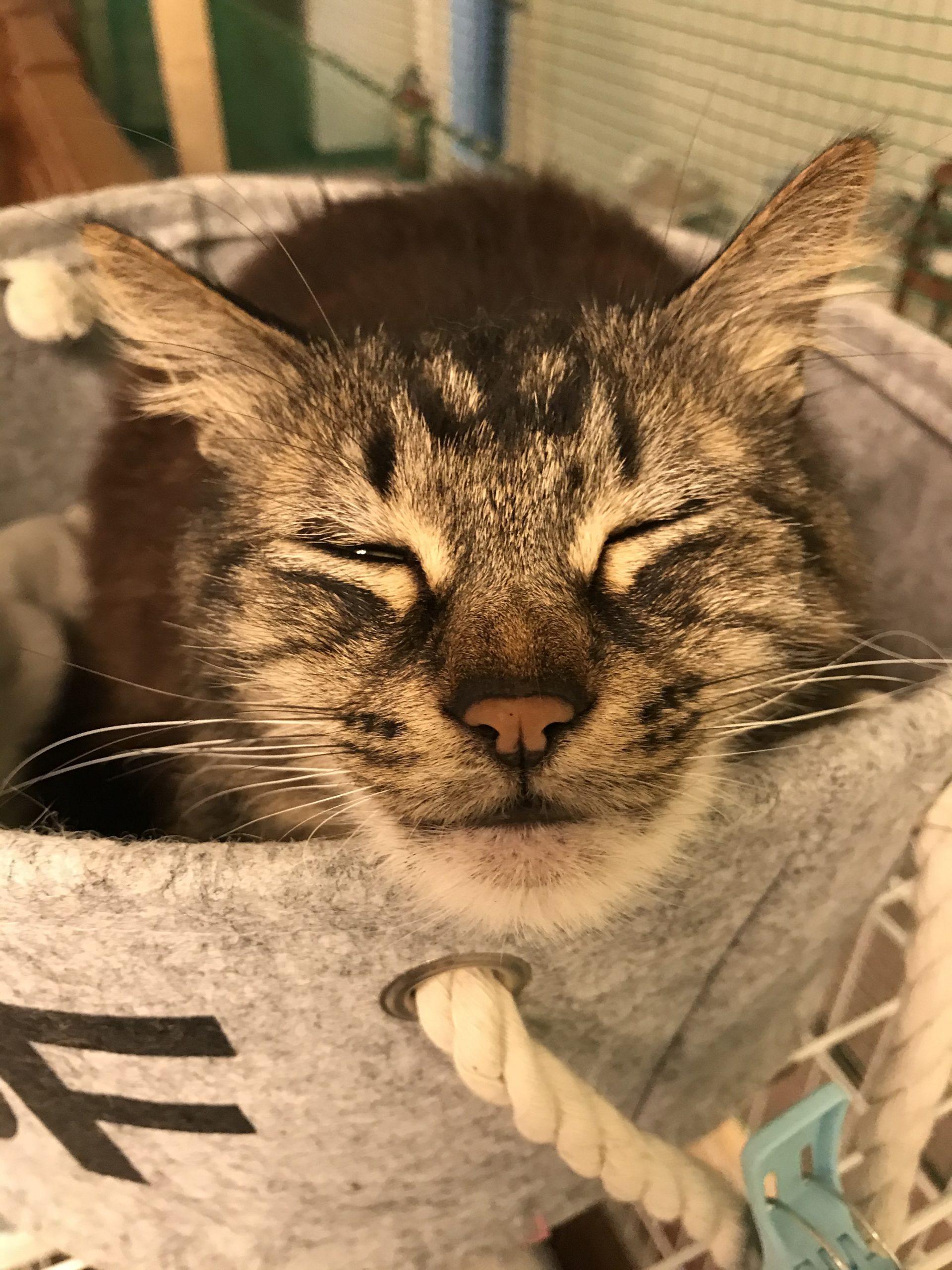 【保護猫】和風猫本舗【重要】