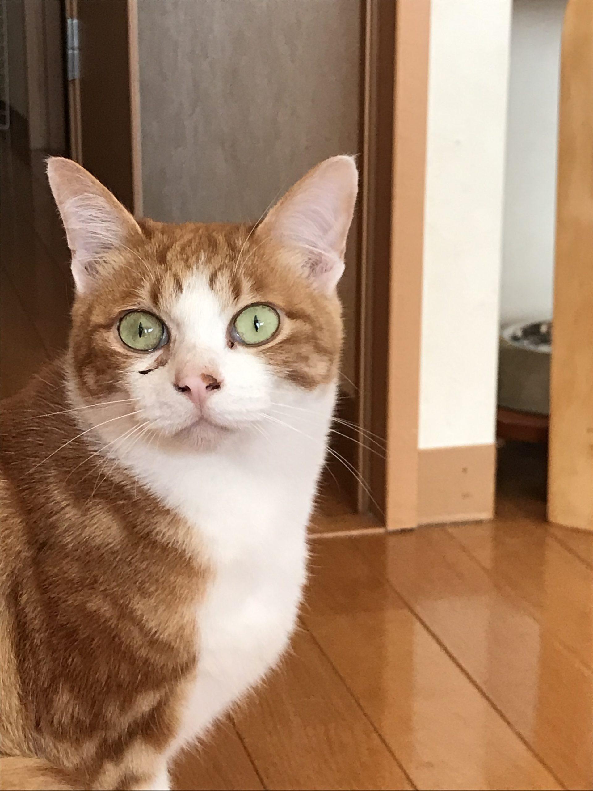 【保護猫】 レイ君♂ナルト君♂ 【番外編】