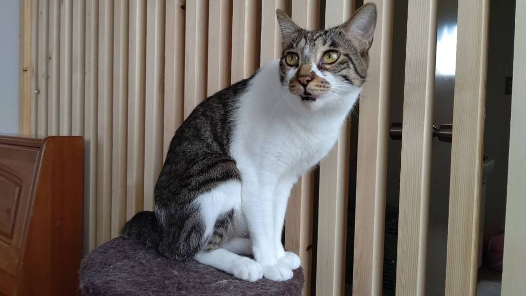 【動画付】和風猫本舗お世話報告🐱